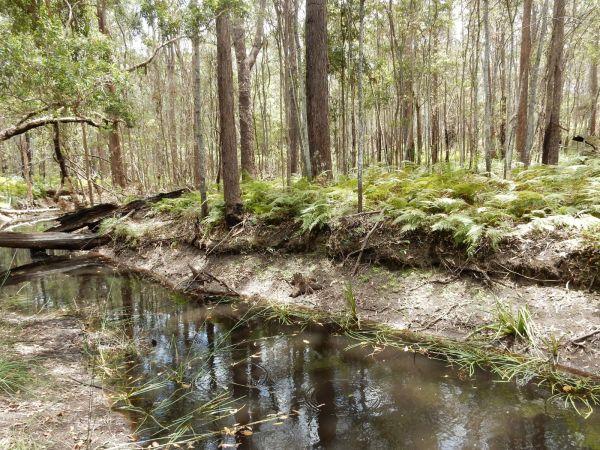 Water near Buhoc Trail
