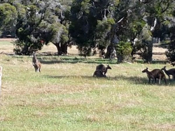Friendly Roos