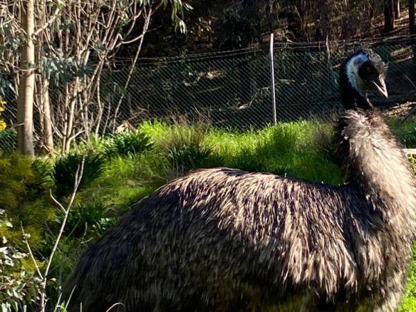 Visit the friendly emu