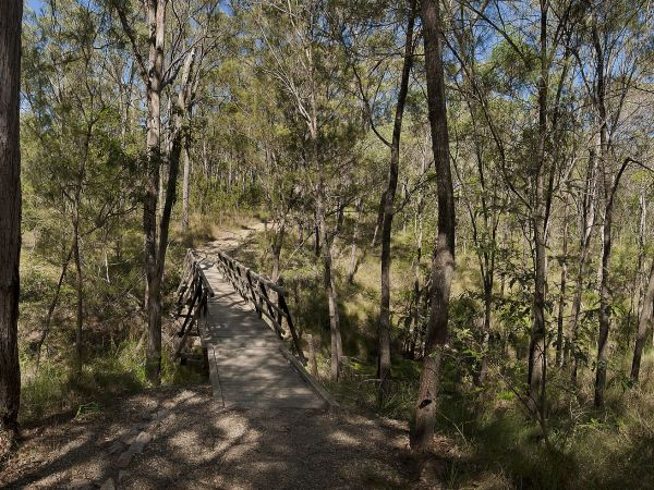 Forest trail through bushland - image by Lyle Radford http://www.lyleradford.com.au
