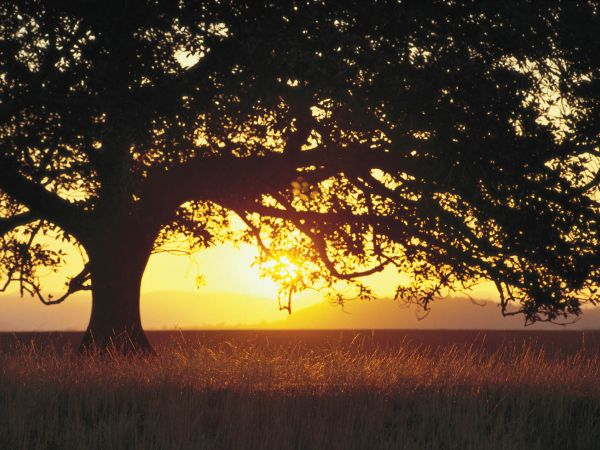Scenic Rim Sunset - Image courtesy of Tourism and Events Queensland
