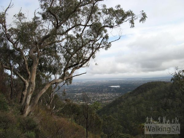 Ambers Gully Track view - image courtesy of Hiking SA