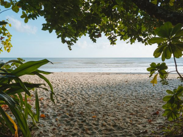 Cape Tribulation Beach - photo by Tourism and Events Queensland