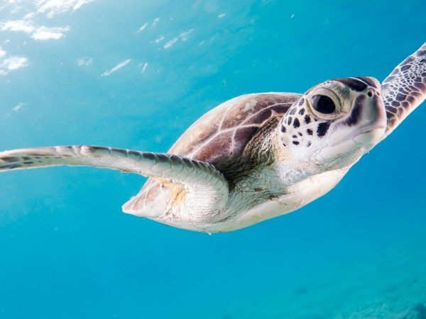 Turtle - Photo by Kris Mikael Krister