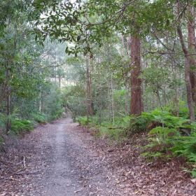 Old Wamuran Rail Trail Hike April 2021