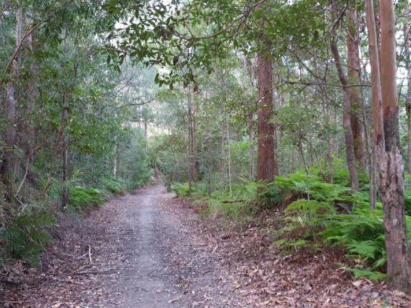 Wamuran Trail - Image courtesy of https://www.railtrails.org.au