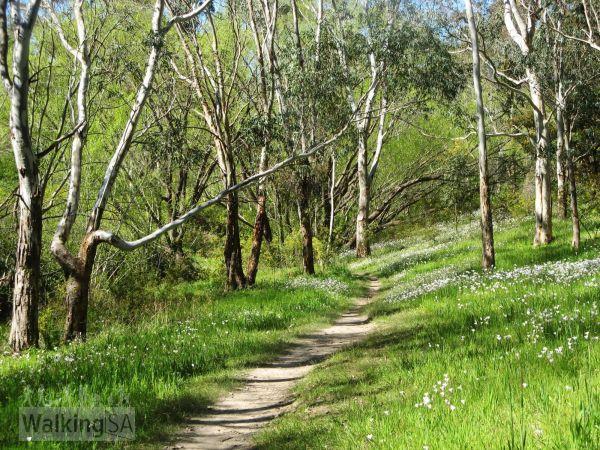 Brownhill - Image courtesy of Walking SA