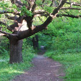 Brownhill Creek Beginners Walk September 2021