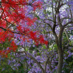 A Walk in the Purple Rain October 2021