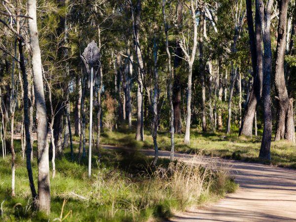 Nurri Millen Totem on the trail