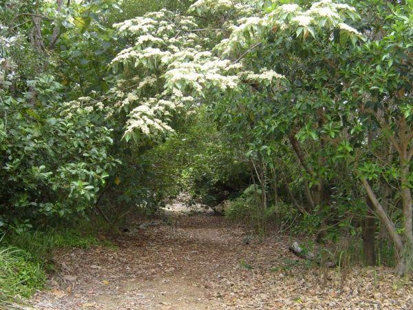 Trail - Image courtesy of https://federationwalk.org