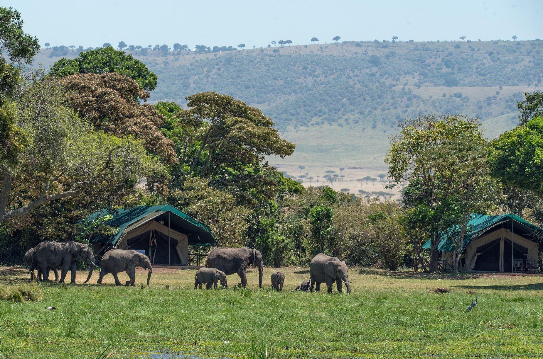 Women Only Kenya & Tanzania Safari (Escorted) 2