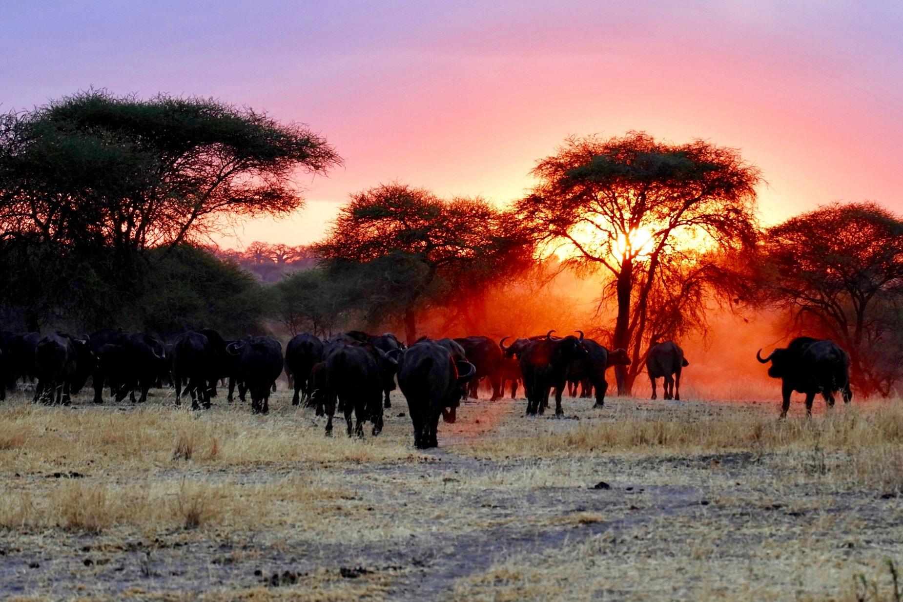Women Only Kenya & Tanzania Safari (Escorted) 6