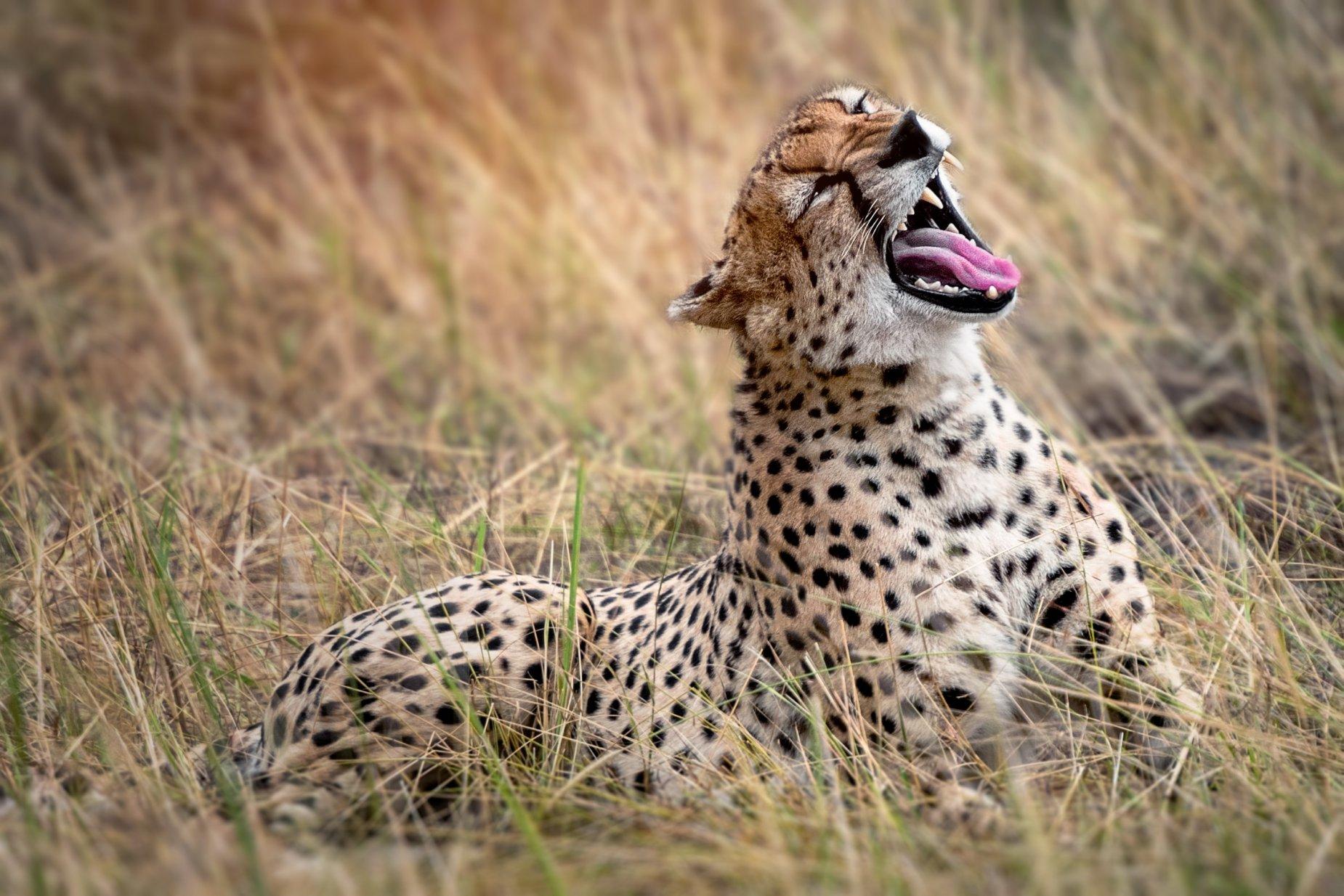 Women Only Kenya & Tanzania Safari (Escorted) 5