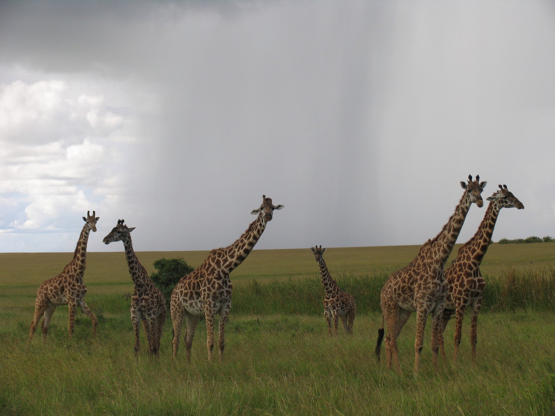 Women Only Kenya & Tanzania Safari (Escorted) 7